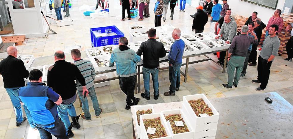 La campaña del langostino del Mar Menor arranca con 240 kilos en un solo día