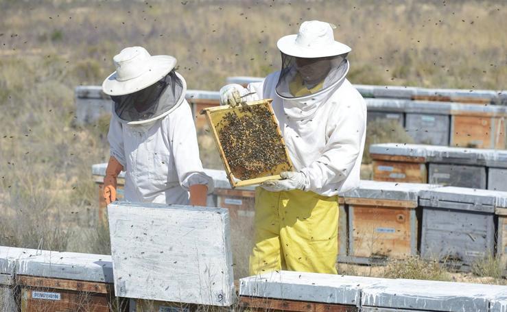 Dos apicultores revisan sus colmenas