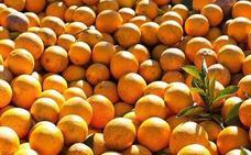 La OCU explica la verdad sobre las naranjas que se venden en los supermercados