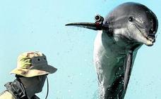 Cetáceos espías y otras armas secretas