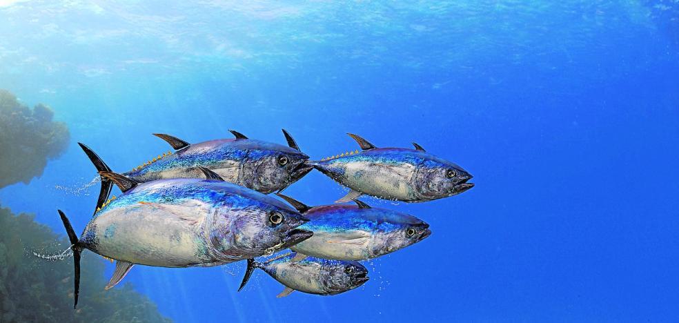 La fauna marina hace mudanza