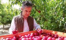 La cosecha de ciruelas subirá casi un 22% esta campaña