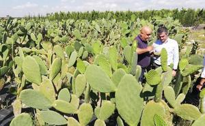 Murcia es una de las comunidades con mayor número de variedades de cultivos