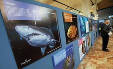 El Oceanogràfic inicia en el Museo de la Ciencia de Murcia su exposición 'Átomos bajo el agua'