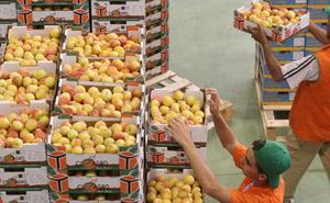 El sector de la fruta de Cieza exigirá una normativa que controle la presión a la baja de los precios