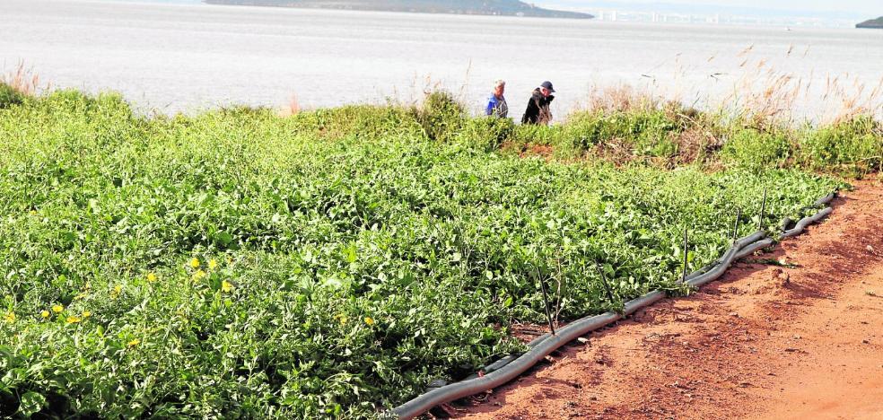 La UMU confirma que las riadas contaminaron el Mar Menor con residuos agrícolas y metales