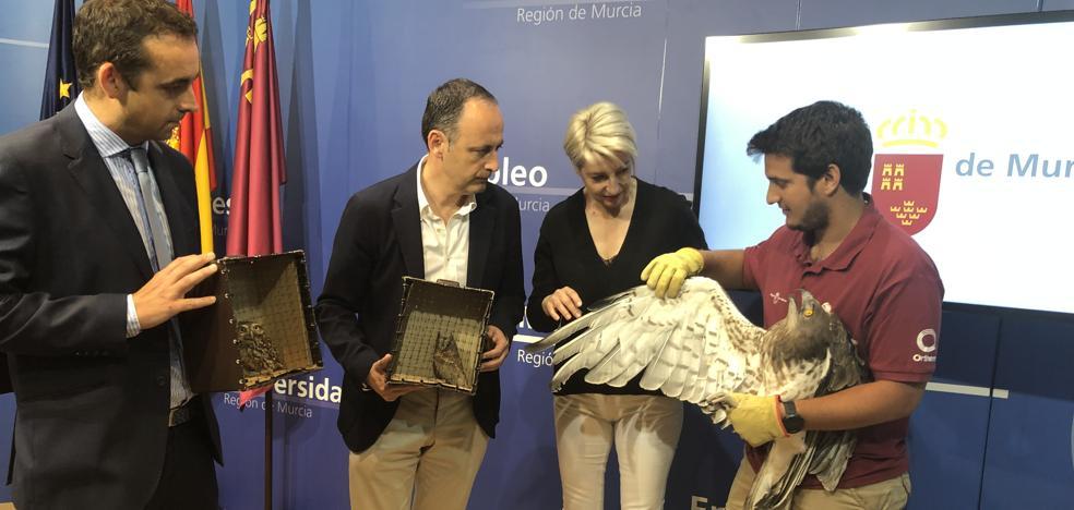 Iberdrola eliminará 7.500 apoyos peligrosos para las aves en tendidos eléctricos