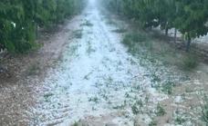 El granizo deja daños en 565 hectáreas de frutales, viñedos y almendros en Jumilla