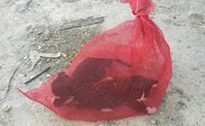 Rescatan a dos gatos abandonados dentro de un coche en Sangonera la Seca