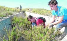 Rescatan ocho tortugas moras en el canal abandonado del Luchena
