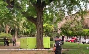 Un hombre se encarama a un árbol en Murcia y amenaza con saltar