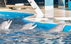 La Guardia Civil investiga la salud de los delfines del zoo de Madrid