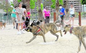 El estado de los 'pipicanes' de Murcia genera malestar entre los dueños de perros
