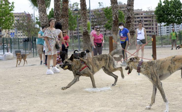 El estado de los 'pipicanes' genera malestar entre los dueños de perros