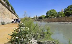 Las márgenes de 'Murcia Río' se llenan de vida con 6.000 plantas arbustivas y más de 200 árboles