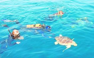 Voluntarios informarán a los bañistas sobre cómo actuar si ven anidar a tortugas marinas