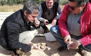 Plantan trufas del desierto en Lorca para estudiar su viabilidad