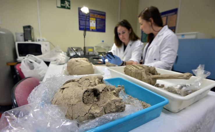 Laboratorios de cinco provincias y de Londres hacen la 'autopsia' a los restos del yacimiento de San Esteban