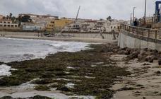 Las algas cubren las playas