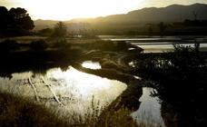 Frente a los espejos de los arrozales