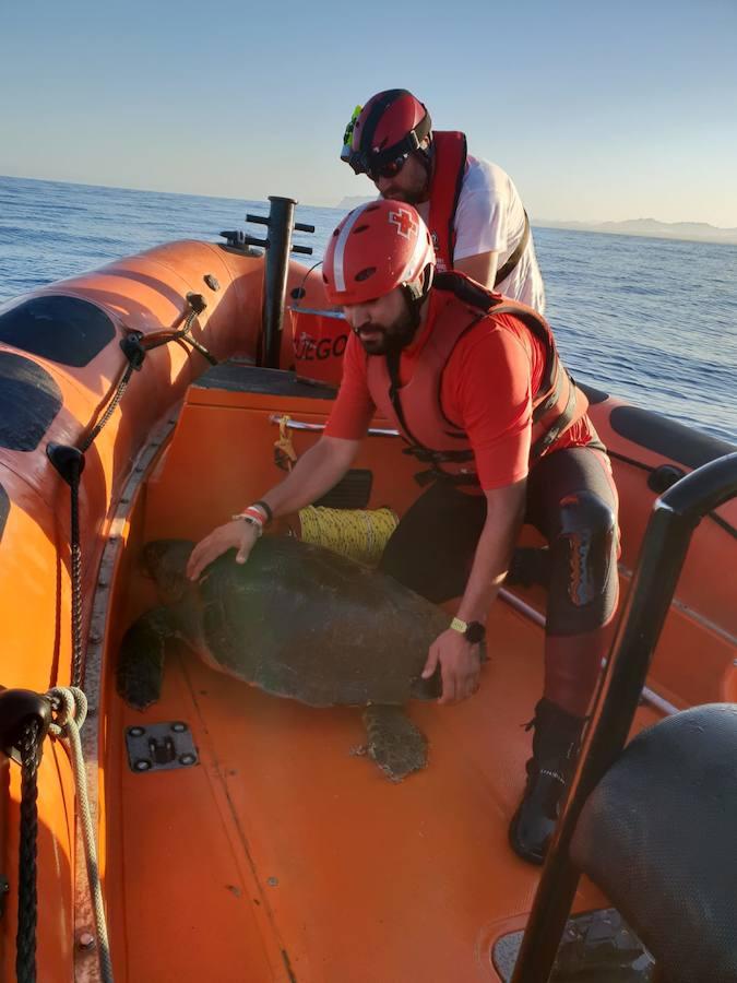 Rescatan a una tortuga que tenía enganchado al cuerpo un arte de pesca y varias botellas de plástico en Mazarrón