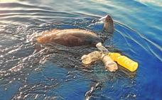 Rescatada una tortuga marina