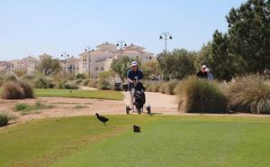 La vida silvestre se aficiona al golf