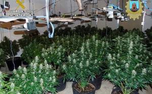 Desmantelan en Bullas dos invernaderos clandestinos de marihuana con más de 100 plantas