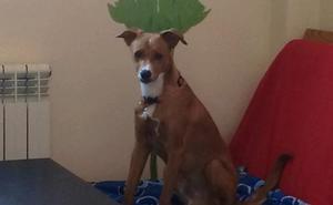Un joven interpone una demanda para reclamar la custodia compartida de su perro 'Indie'