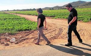 Casi tres millones de lechugas se quedan sin recoger en Yecla al no ser colocadas en el mercado