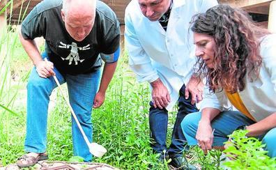 Tres casos de chikungunya en Alicante ponen en alerta a Salud