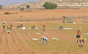 Acuerdo para aplicar la subida del salario mínimo a los 25.000 trabajadores del campo en la Región de Murcia
