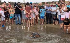 Liberan a una tortuga boba rescatada entre plásticos y basura en Mazarrón