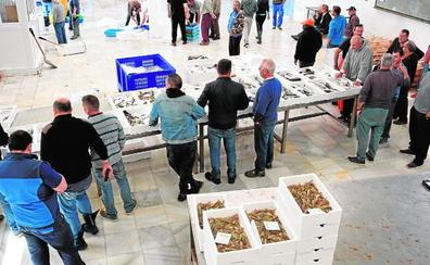 La campaña del langostino acaba con casi 18.500 kilos de capturas en el Mar Menor