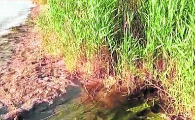 Precintan la desalobradora que da riego al campo de golf de Los Alcázares por supuestos vertidos a la laguna