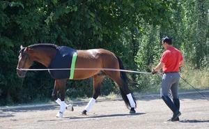 La salud de los caballos de alta competición, un nuevo valor medible en tiempo real