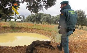Denunciado en Guadalajara por dejar morir de hambre a un dogo alemán