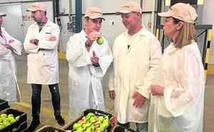 El municipio es el mayor productor de pera Ercolini