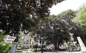 Murcia se propone duplicar el número de árboles en la ciudad antes de 2030