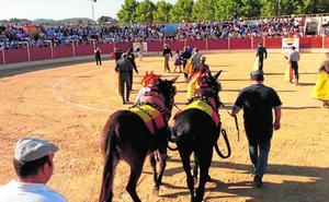 Los taurinos cargan contra el alcalde de Mula por la consulta «ilegal» sobre los festejos