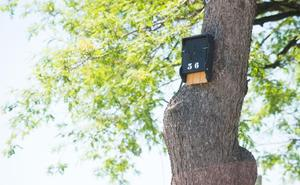 Los murciélagos habitan en sus nuevos refugios