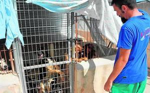 La protectora de animales de Cieza sufre «colapso» en sus instalaciones