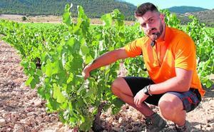 La doble cara del éxito de los vinos murcianos