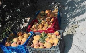 Sorprenden a dos jóvenes vendiendo fruta robada en el mercado semanal de Cieza
