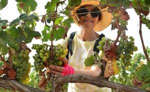 La Politécnica busca voluntarios para recoger la cosecha de uva merseguera