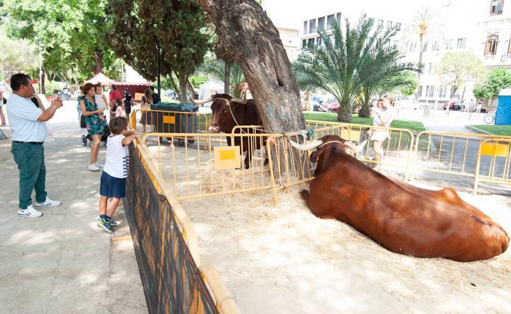 Animales autóctonos en pleno centro de Murcia