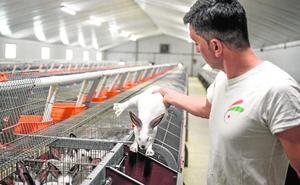 La cría de conejos en la Región cae a la mitad por falta de demanda