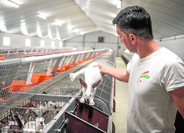 La Cría De Conejos En La Región Cae A La Mitad Por Falta De Demanda La Verdad