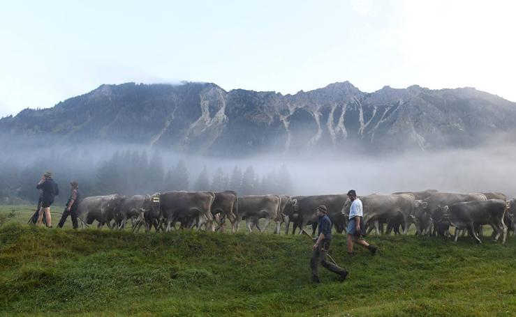 Las vacas vuelven de sus vacaciones