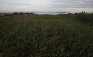 Medio Ambiente rechaza el proyecto de filtro verde del Mar Menor